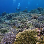 Reef Monitoring System - WWF-Philippines - ComCo Southeast Asia New PR Smart Social Best Agency